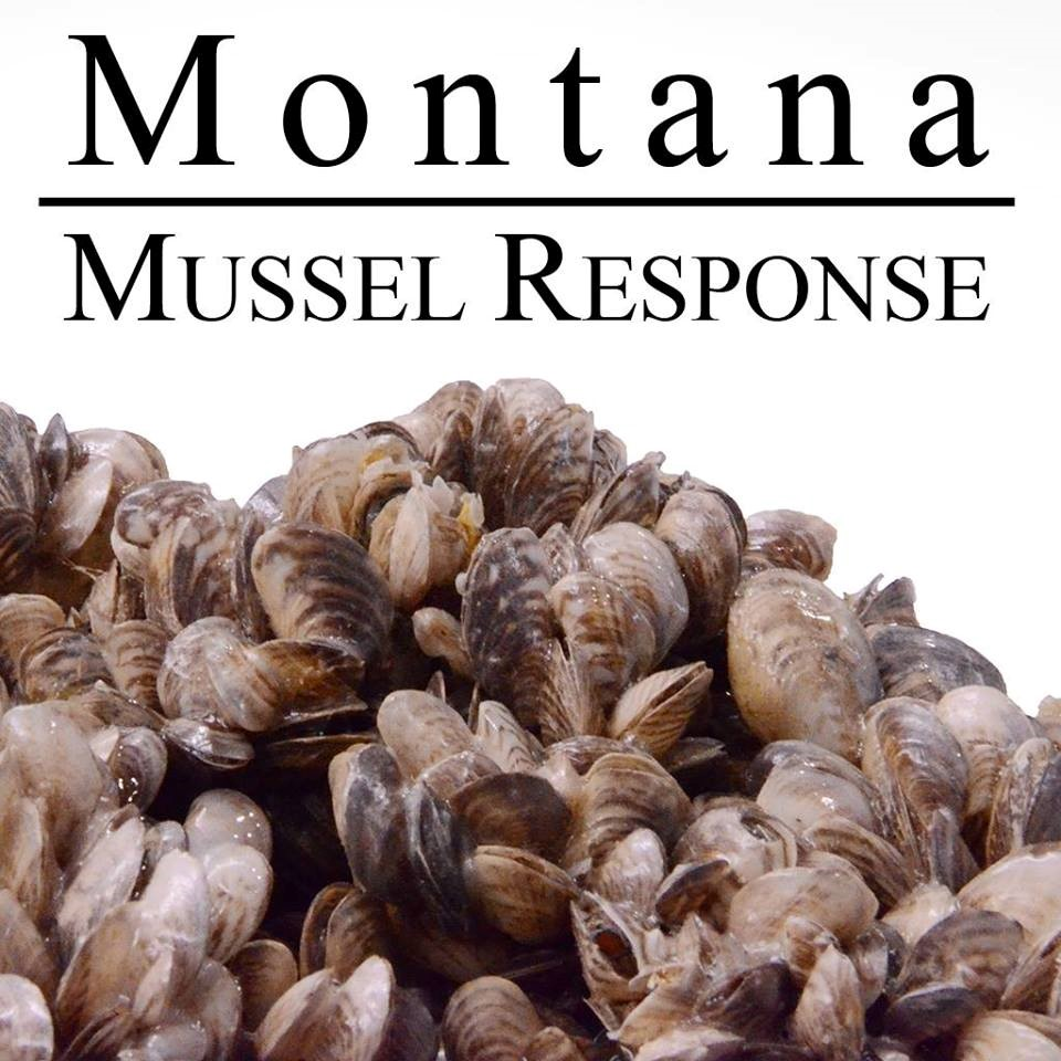 mussel response picture